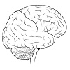na-skolko-procentov-rabotaet-mozg-cheloveka