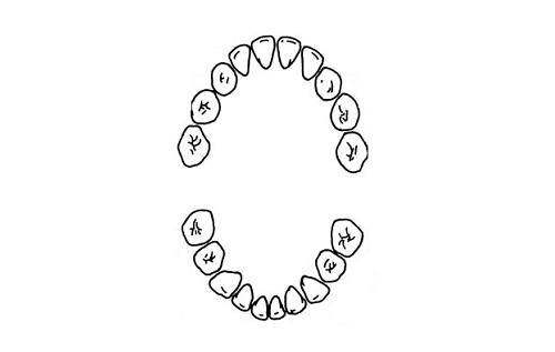 Схема роста зубов до 3 лет
